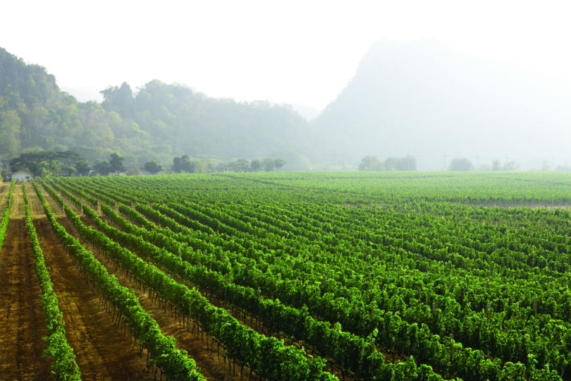 The soil make up of the area makes it very suitable for growing grapes.