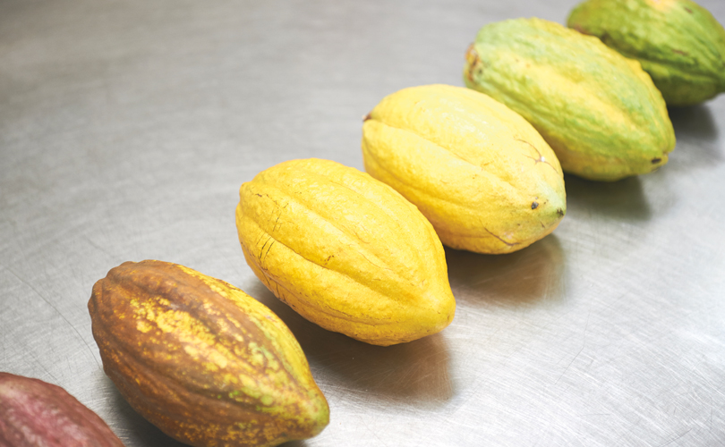 Cacao fruits come in all shapes, colours and more importantly, flavour profiles.